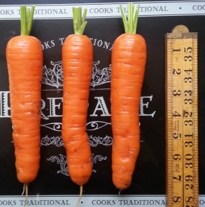 18 20150817_174022 vvs three carrots